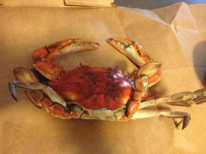 one of my cooked crabs before I cracked it open -- oh dear